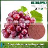 100% natural grape skin extract powder 30% polyphenols