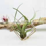 Tillandsia gold flower small metal container iron cubic geometry four airplant receptacle