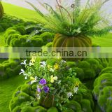 New Product direct manufacturer types of ornamental plants ornamental plants for wholesale&decoration