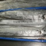 FROZEN RIBBON FISH WHOLE IWP AA GRADE