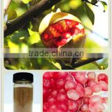 Free Sample Natural Pomegranate Extract In Bulk