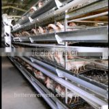 high quality H type commercial broiler chicken cages for chiken poultry farm(Factory price)