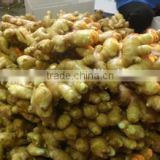 New crop organic ginger with high quality