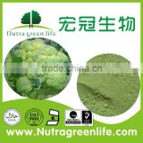 100% nature broccoli powder extract,natural broccoli extract,broccoli sprout extract
