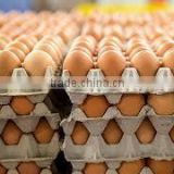 Farm Fresh Chicken Table Brown and White Eggs !! Top Grade.