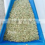 Green Lentils best quality 6mm