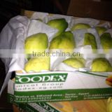 FRESH GUAVA - EXPORTED QUALITY - GOOD PRICE FROM Egypt