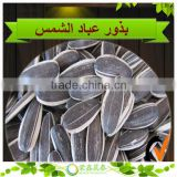 New Crop Sunflower Seed Ton Price