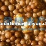 china artemia cysts/china wholesale/brine shrimps