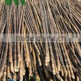 wholesale pricing black bamboo