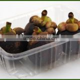 new design Fresh food tray PP packaging container with high quality