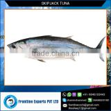Top Quality Sea Frozen Skipjack Tuna Loin Price