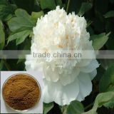 paeonia lactiflora extract, natural white peony root extract,10%~98% HPLC Paeoniflorin