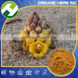 Cistanche Herb Powder Echinacoside Extract