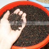 Non-GMO Black Pepper/ White Pepper Corns (Mobile: +84965152844)