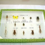 insect specimens,laboratory preserved specimen,13 kinds of insects for scientific research, teaching