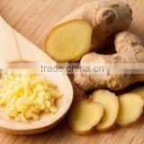 Fresh Ginger from Vietnam, High quality, organic, by HAGIMEX