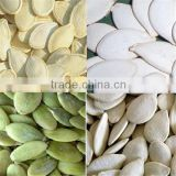 now crop pumpkin seed from heilongjiang