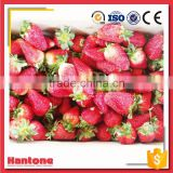 Frozen Organic Strawberry For Export