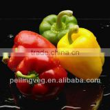 10/15kg carton bags 2013 new crop Chinese Color (Red Yellow Green) Sweet Pepper