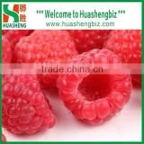 High Quality Frozen Raspberry Fruit/Whole Frozen Raspberry