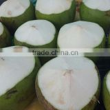 Young Fresh Coconut from Thailand