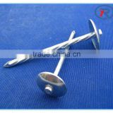 Galvanized Umbrella Head Roofing Nails With Smooth/Twist Shank by Low Price