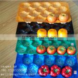 Free Samples Offered 5lb/15lb Mexico Market Popular Polypropylene Fresh Tomato Tray Packaging in Food Grade