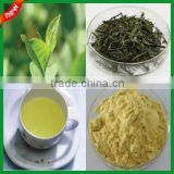 Instant Green Tea Powder for Health food additive