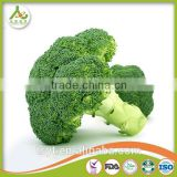 Broccoli Fresh Broccoli Hot Sale fresh green Broccoli
