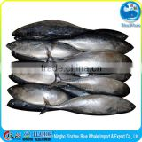 Frozen fish delicious Bonito the price is reasonable