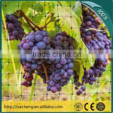 Guangzhou Anti-bird Netting For Garden/ Bird Proof Mesh/ Grape Protection Net