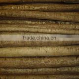 Chinese Fresh High Quality Burdock