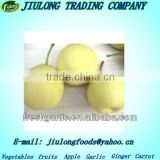 Chinese Fresh fruit ya pear get latest price
