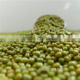 2.8mm+,3.6mm+,3.8mm+,4.2mm+ Green mung bean for sprouting