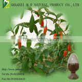 chinese barbary Wolfberry Fruit Extract