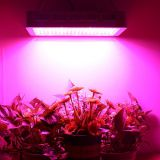 Hydroponic Full Spectrum 1500W Panel LED Grow Lights