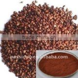 Bulk natural&Kosher Grape Seed Extract 95%UV/ Plant Extract
