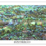 New Zealand abalone (paua) shell paper/shell sheet/shell laminate