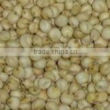 White Sorghum from India