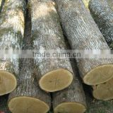 WHITE OAK LOGS