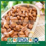 Continous Supply Convenience Food Sweets Siberian Open Pine Nuts in Shell