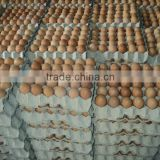 Fresh Chicken Brown & White Table Eggs in Bulk