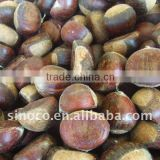 Sweet Chestnuts (40-60)