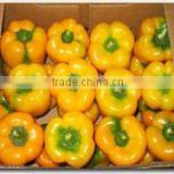 Color Capsicum ( Red - Yellow - Green )