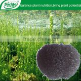 marine algae extract fertilizer