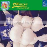 Chinese Fresh Garlic Pure White Garlic 3 Pieces Net Bag