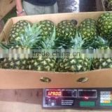FRESH PINEAPPLES / +84984418844 whatsapp