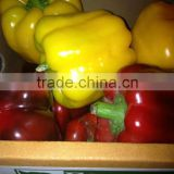 Farm Fresh Color Capsicum from egypt