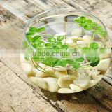 Engraved Lucky Stone, Words Cobble Stone, Natural Decorative Stone